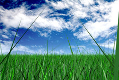 Grass and a blue sky Royalty Free Stock Images