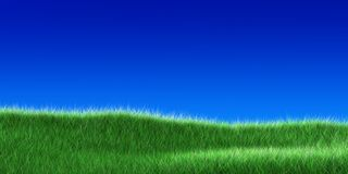 Grass on a blue sky Stock Photo