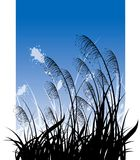 Grass on blue sky stock image