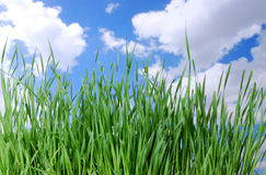 Grass and a Blue Sky Royalty Free Stock Image