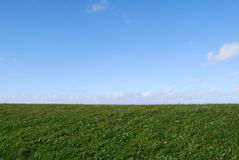 Grass with blue sky Royalty Free Stock Photo