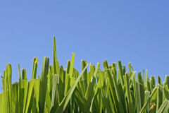Grass and Blue Sky. Grass with the blue sky for a background Royalty Free Stock Images