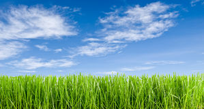 Grass and blue sky. Grass short and blue sky, panoramic Royalty Free Stock Photography