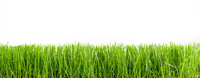 Grass and blue sky. Grass short isolated on white, panoramic Royalty Free Stock Photo
