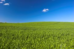 Grass and blue sky. Green grassy meadow and blue clear sky royalty free stock images
