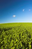 Grass and blue sky. Green grassy meadow and blue clear sky stock images