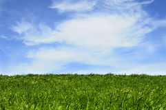 Grass and blue sky background. Green grass field under blue sky with clouds background Stock Images