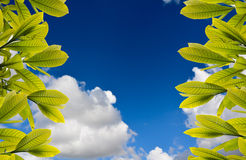 Grass and blue sky background. Leaves, grass and blue sky background Stock Photo