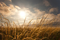 Grass and blue sky. With clouds and sun Royalty Free Stock Photography