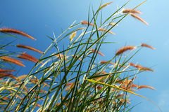Grass and blue sky Stock Images