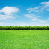 Grass and blue sky. Green grass and green fence Stock Photography