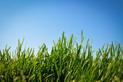 Grass and blue sky Stock Photos