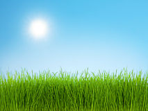 Grass and Blue Sky. Photo of green grass against bright blue sky on a sunny day royalty free stock photo