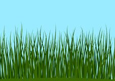 Grass and Blue Sky Seamless Stock Image