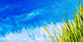 Grass blue sky spring banner. Grass on blue sky, spring banner, nature background royalty free stock images