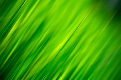 Grass blur. Fresh grass green abstract background Stock Photography