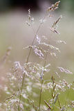Grass in blur background Stock Photography