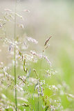 Grass in blur background. Stock Photography