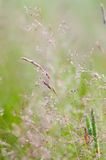 Grass in blur background Royalty Free Stock Images