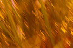 Grass blur lines with oranges and yellows Stock Photography
