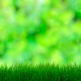 Grass On Blurred Background Royalty Free Stock Photo