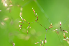 Grass. In blurred background. Small focus Field Royalty Free Stock Image