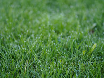 Grass with blurry background Stock Image