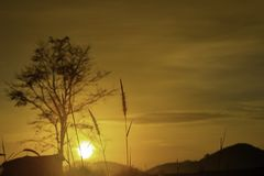 Grass and blurry background image of the sun in the morning stock photo