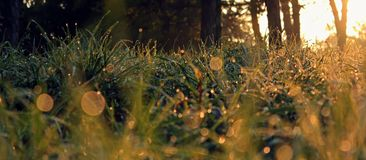 Grass Bokeh - autumn Royalty Free Stock Photo