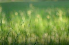 Grass bokeh background Royalty Free Stock Image