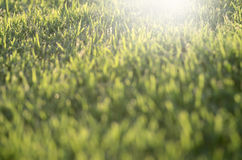 Grass bokeh background Royalty Free Stock Images