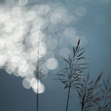 Grass and bokeh. This is beautiful summer grass on sunny light Royalty Free Stock Photography