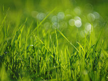 Grass and bokeh bubbles on a sunny day Stock Image