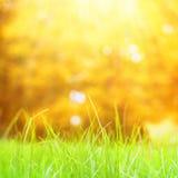 Grass with bokeh. Stock Photos