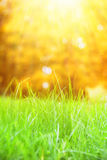 Grass with bokeh. Royalty Free Stock Photography