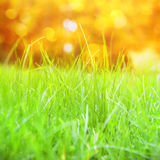 Grass with bokeh. Stock Photos