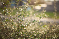 Grass and bokeh. On the side walk Stock Photo