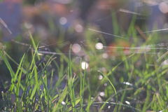 Grass with bokeh. Grass and spiderweb with bokeh Royalty Free Stock Photos