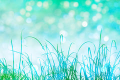 Grass and Bokeh. Tall grass in green silhouette with sparkling bokeh light effects in the background Royalty Free Stock Images
