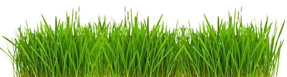 Grass borde Stock Photos