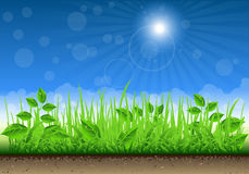 Grass Border On Clear Sky Background Royalty Free Stock Image