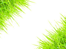 Grass border conner for text frame.  Stock Images
