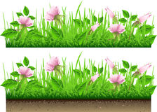 Grass Border with Flowers Isolated On White Stock Photography