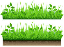 Grass Border Isolated On White Background Stock Photo