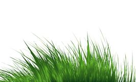 Grass Border , Simple meadow grass, wild lawn. Vector Illustration. Grass Border , Abstract green grass . Simple meadow grass, wild lawn. Vector Illustration royalty free stock images