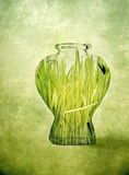 Grass in a bottle Royalty Free Stock Photos
