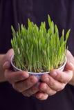 Grass bowl Royalty Free Stock Photos