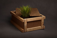 Grass in a box Royalty Free Stock Images