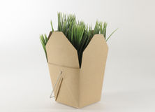 Grass Box. Tan box filled with fresh green grass Royalty Free Stock Image