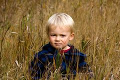 Grass boy. Young boy sitting in grass with a blue jacket looking at the camera in the fall Stock Photos